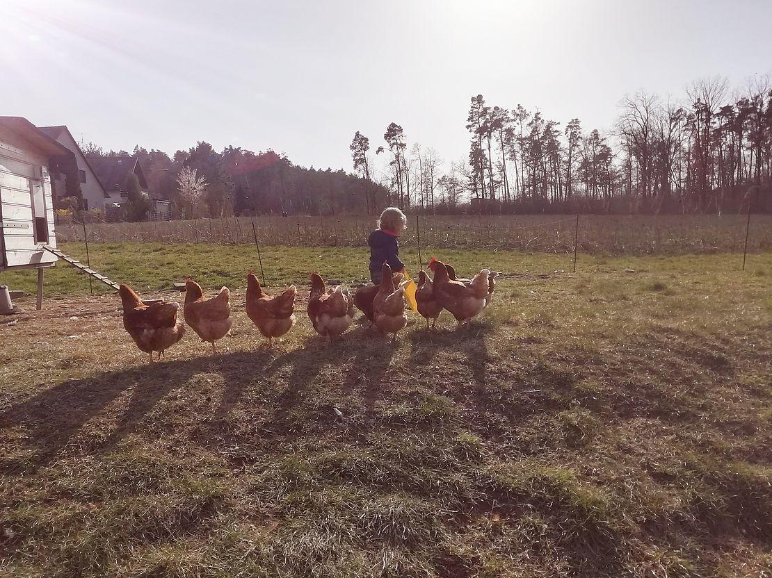 sabrinas-hühner-auf-dem-feld