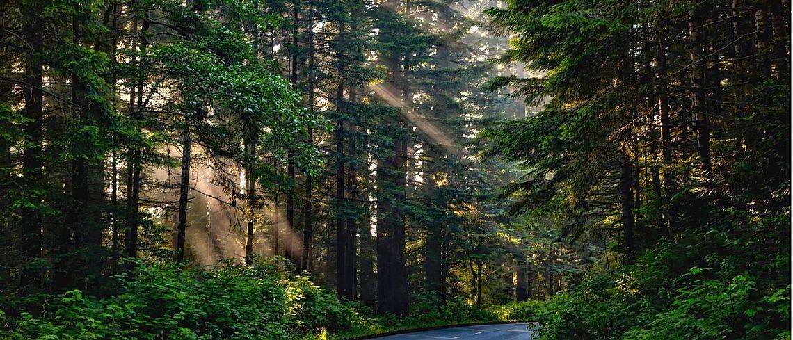Grüne Baume, Produktion, Nachhaltigkeit