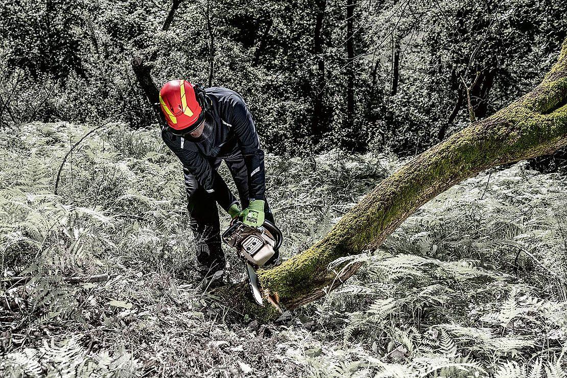 pilarz wycina drzewo